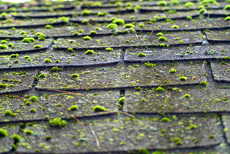 Roof Cleaning And Moss Control Service In Vancouver